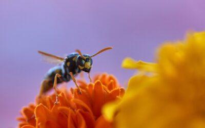 Jak zabezpieczyć się przed skutkami użądlenia osy i pszczoły?